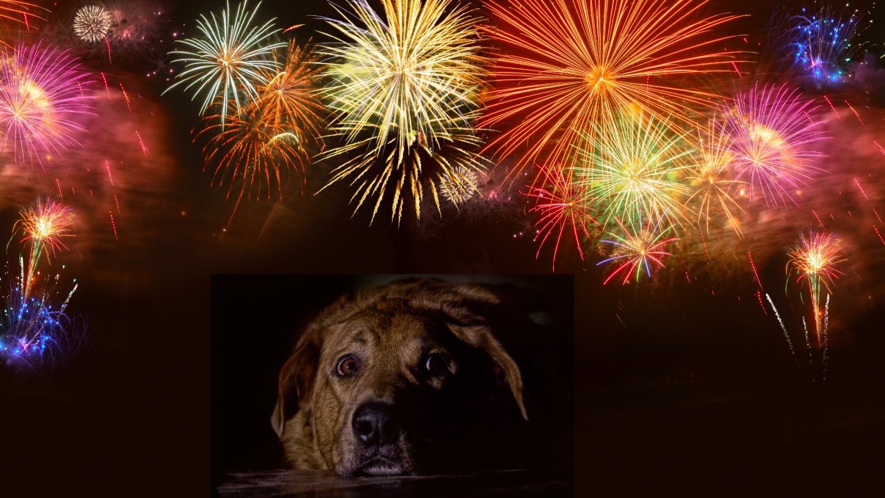 Are Your Pets Afraid of Fireworks?